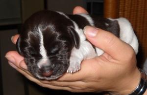 Pup op handen