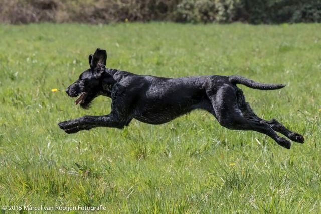 training bobby